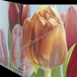 MN Tulpen