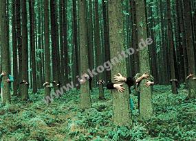KD Im Wald